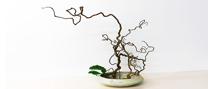 drittes Beispiel für Ikebana in Biberach
